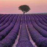 Provence France – Things to See and Do