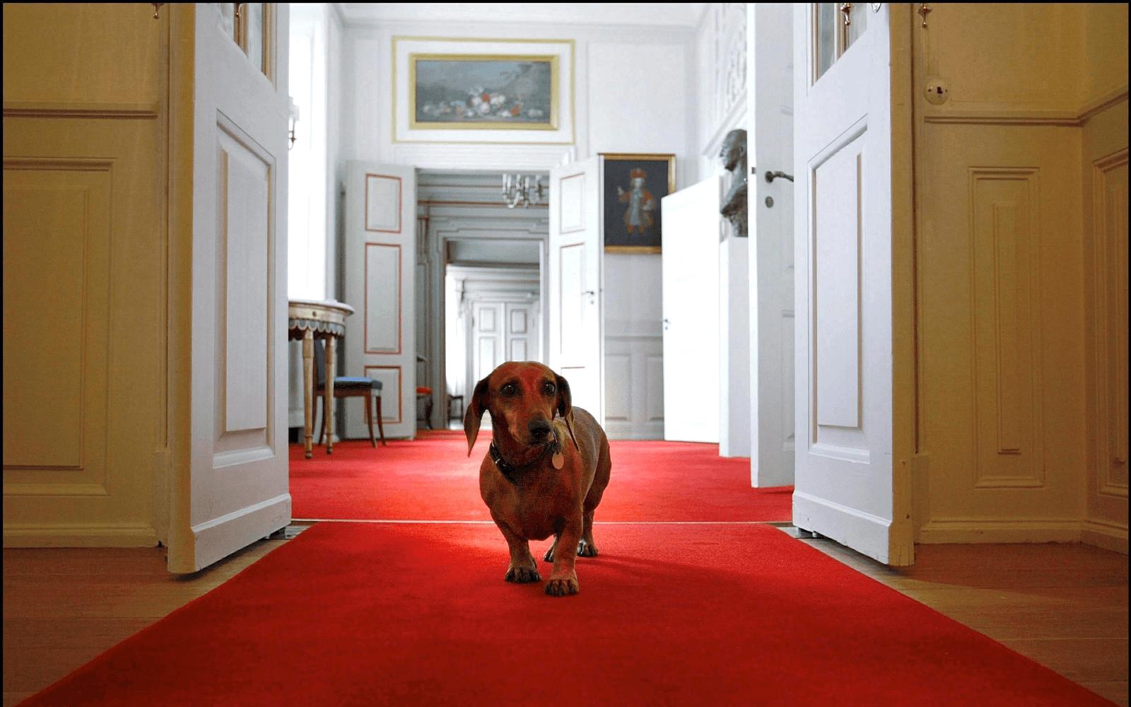 dachshund museum